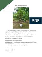 WA.0813-2711-9234, Jual Durian Musang King, Bibit Durian Musang King Siap Buah,