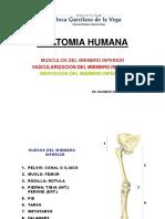 (Clase 4)Musculos, Vascularizacion e Inervacion Del MM_II