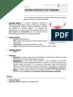 Anatomía Sistema Reproductor Femenino - Cristhian Carvajal Mery