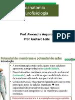 Neuroanatomia/Neurofisiologia - Prof. Alexandre Augusto; Prof. Gustavo Camargos