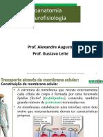 Neurofisiologia - Prof. Alexandre Augusto; Prof. Gustavo Camargos