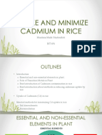 Bit 691 Uptake and Management of Cadmium in Rice