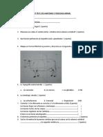 320481721-Examen-de-Anatomia-y-Fisiologia-Animal-II.docx