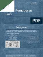Organ Pernapasan Ikan