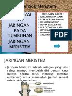Kelompok Meristem.pptx