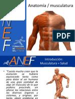 ANATOMIA Y MUSCULACION ANEF.pdf