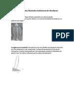 dokumen.site_instrumentos-musicales-autoctonos-de-hondurasdocx.pdf