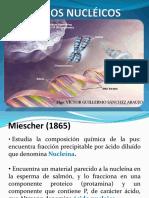 3. Ácidos Nucleicos
