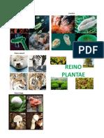 Reinos animal y plantas