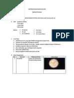 Laporan Praktikum Biologi Protista