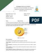 UNIVERSIDAD TÉCNICA DE AMBATO.docx