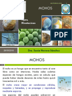 03 Mohos Clase 3