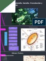 Proteus, Klebsiella, Serratia, Cronobacter