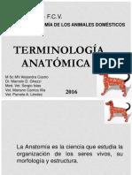 terminología anatómica.pdf