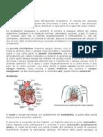 Modulo 1 Anatomia Cardiaca