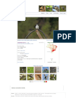 Andorinha-do-rio (Tachycineta Albiventer)