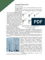 Specificul Taierii Pomilor de Prun Si Piersic