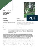 Actaea Black Cohosh herb materia medica