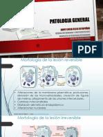 4. Necrosis PDF