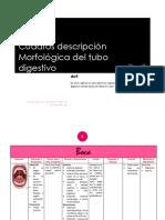 Cuadros Descripción Morfológica Del Tubo Digestivo