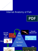 Internal Anatomy of Fish.ppt