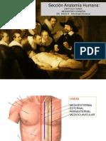 2.1.0-Anatomia Del Torax - Corazon