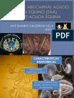 5 Colitis en Equinos.pdf