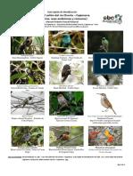 Guía de Aves Cañón de Sangal Cajamarca.pdf