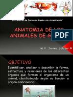 1era Clase de Anatomia 2017- I Aula Virtual1