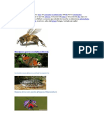 6 Insectos.docx