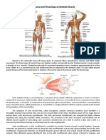 Anatomy and Physiology of Skeletal Muscle