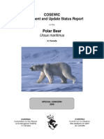 Sr Polar Bear 0808 e