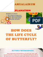 How the Process Butterfly of Metamorphosis