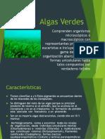 Algas Verdes Terminado
