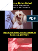 Esofago veterinaria