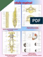 Atlas de Apoio - Neuroanatomia