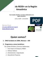 Contexto de REDD+ en la Región Amazónica