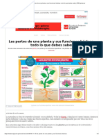 Las Partes de Una Planta y Sus Funciones Básicas_ Todo Lo Que Debes Saber _ ElPopular.pe