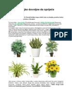 Tri Kucne Biljke Dovoljne Da Sprijece Glavobolju1