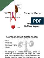 Anatomia do Sistema Renal