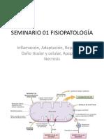 Seminario 01 Fisiopato Seccion01
