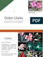 8._Liliales
