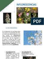 inflorescencias 2