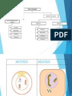 1º_Mitosis y Meiosis