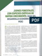 Plantaciones Forestales - Base Desarrollo en El Perú