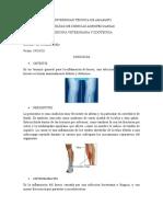 osteogénesis y lesiones anatomopatológicas