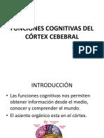 10 Funciones Cognitivas Del Córtex Cebrbral