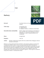 Barberry materia medica herbs
