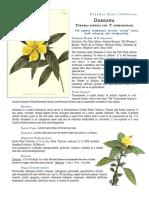 Damiana Turnera Diffusa materia medica herbs