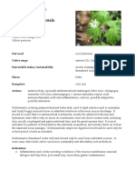 Hydrastis Canadensis Goldenseal materia medica herbs